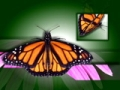 Butterflies Video Background