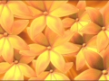 Flowers 02 Video Background