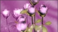 HD Flowers 007 Video Background
