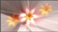 HD Flowers 012 Video Background